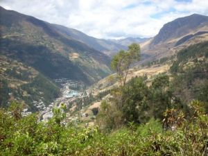 Huariaca